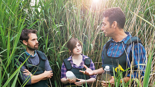 Environmental science researcher and students sampling in a reed bed