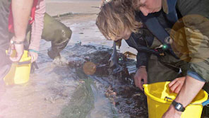 Students collecting samples on a beach