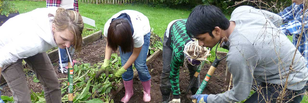Students digging up soil on an allotment patch