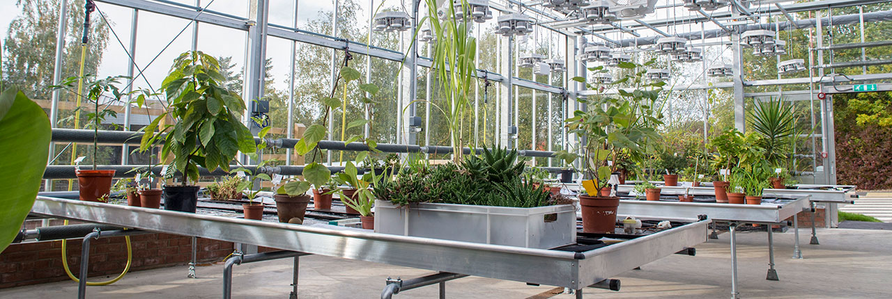 Plants inside the Envirotron greenhouse