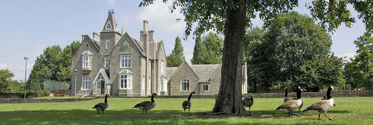 Geese in front of Wallscourt Farm on a sunny day