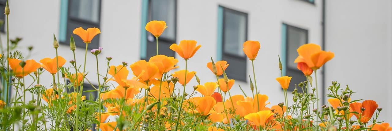 Wild flowers in front of student accommodation building